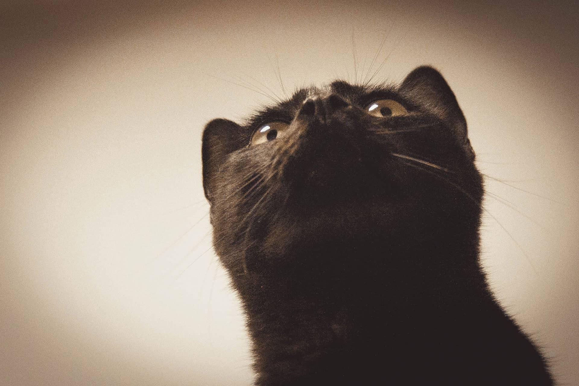 Sheltercats – Arca del Torcal