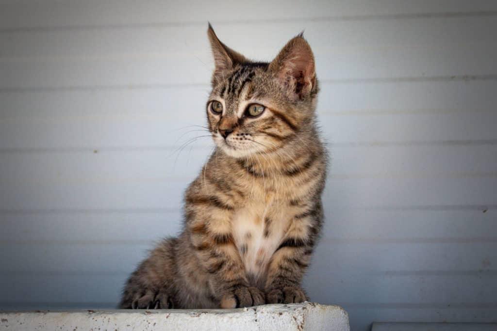 Dunia – Kitten 2019