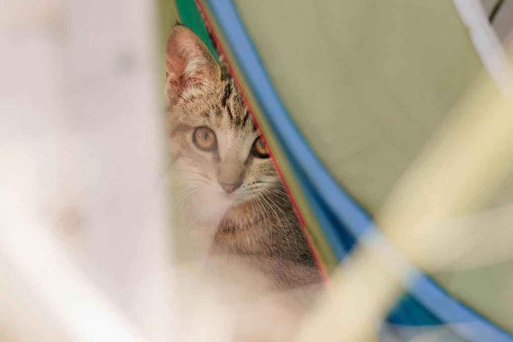 Ekana – Katze versteckt