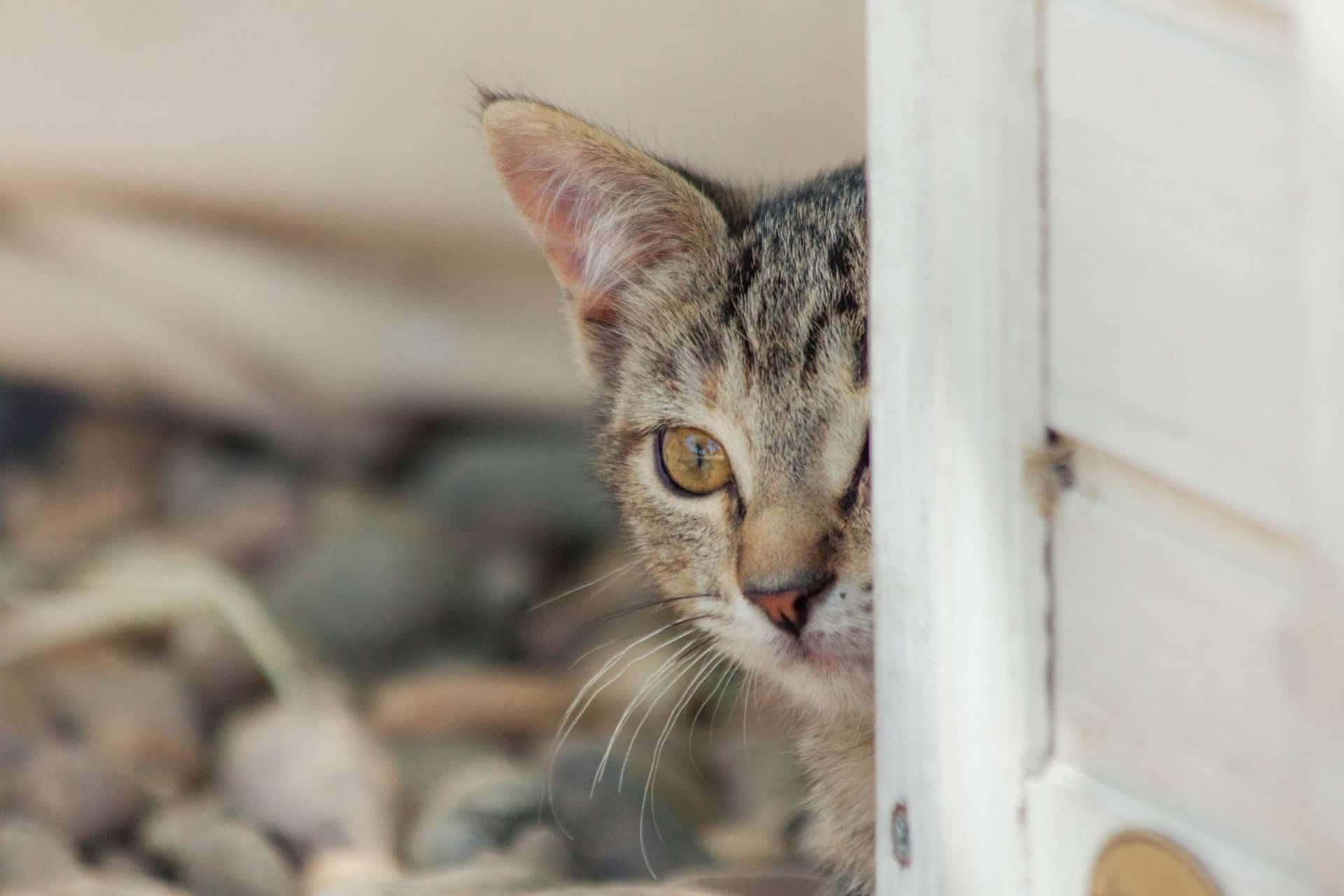 Ekana –Kitten 2019
