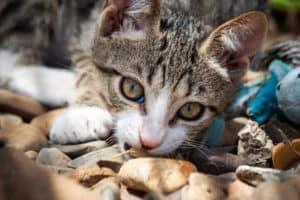 Etu – Kitten 2019