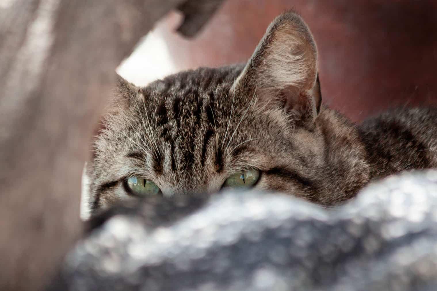 Grecia – Katze versteckt