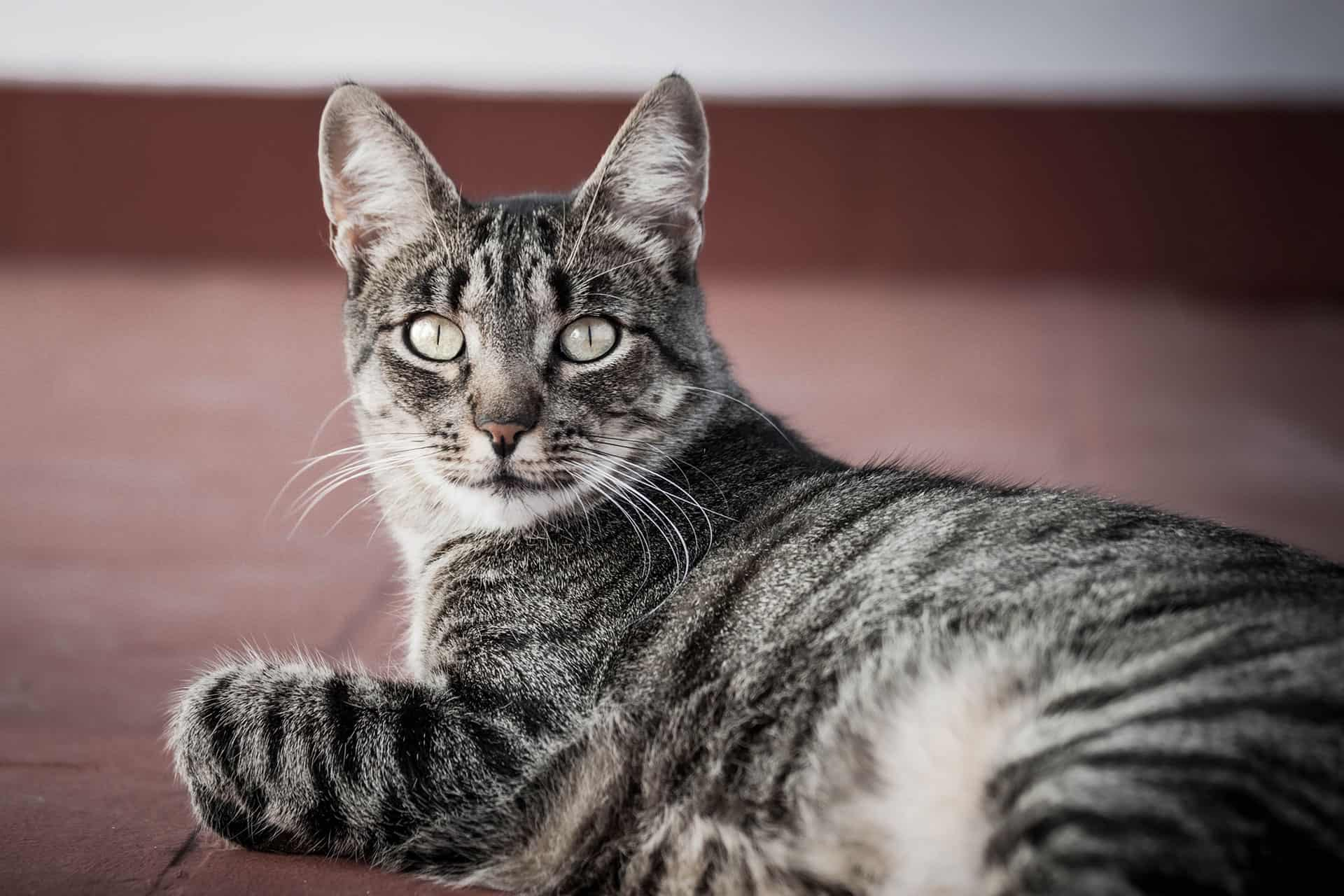 Ronda Katze Augen