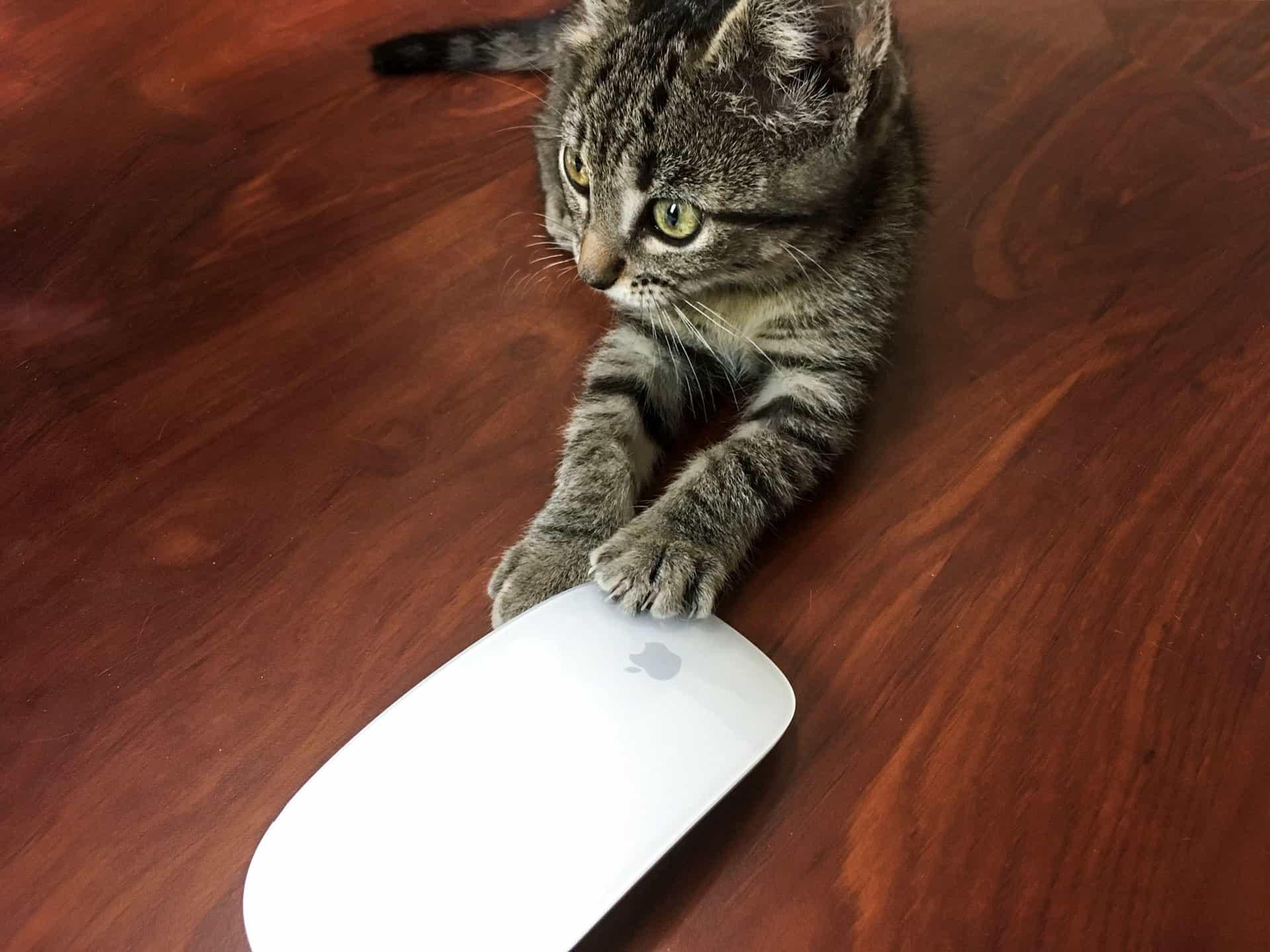 Katze Ronda mit Maus