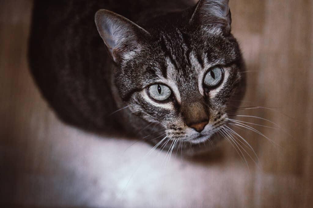 cats_PARENAS_2021-01-14_DENIA-0034-2