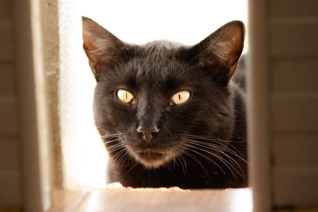 cats_PARENAS_2021-01-14_GADI-4645