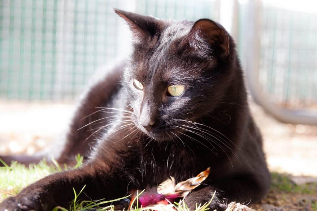 cats_PARENAS_2021-01-14_HASAD-9800