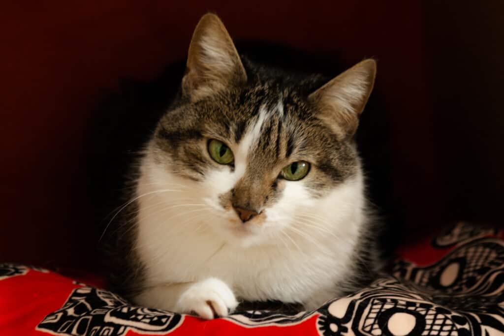 cats_PARENAS_2021-01-14_LEIRE-4581