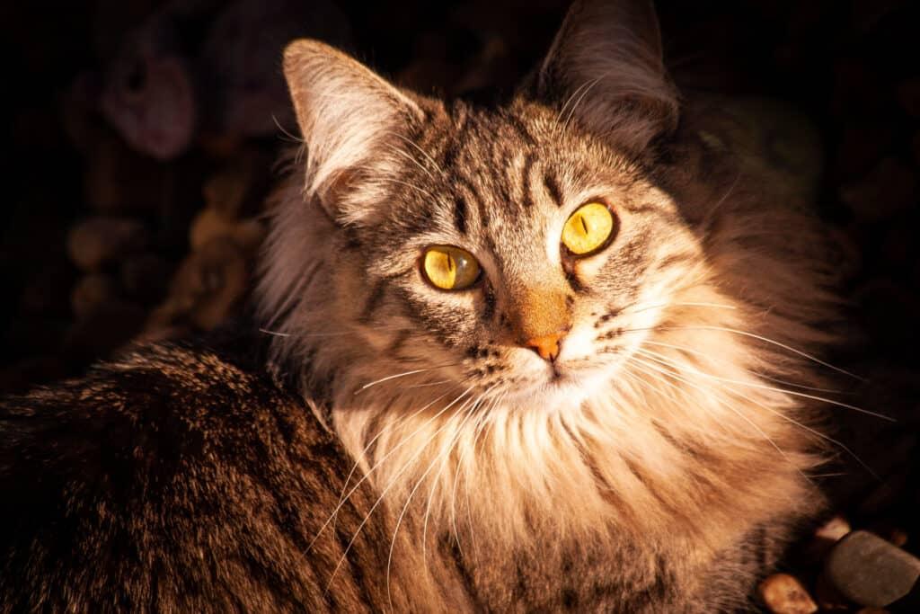 cats_PARENAS_2021-01-14_OFRA-4561