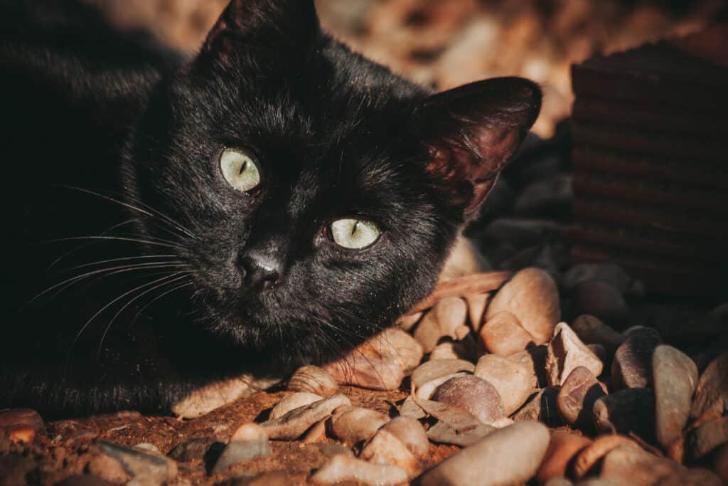 cats_PARENAS_2021-01-14_OWEN-4487