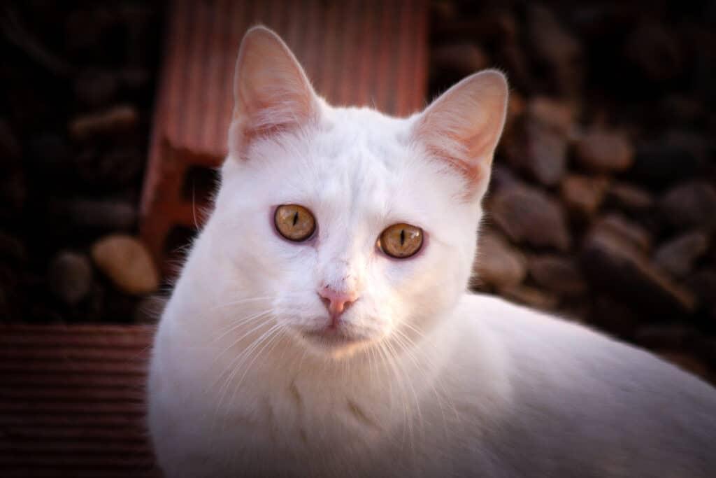 cats_PARENAS_2021-01-14_PERSEA-4744