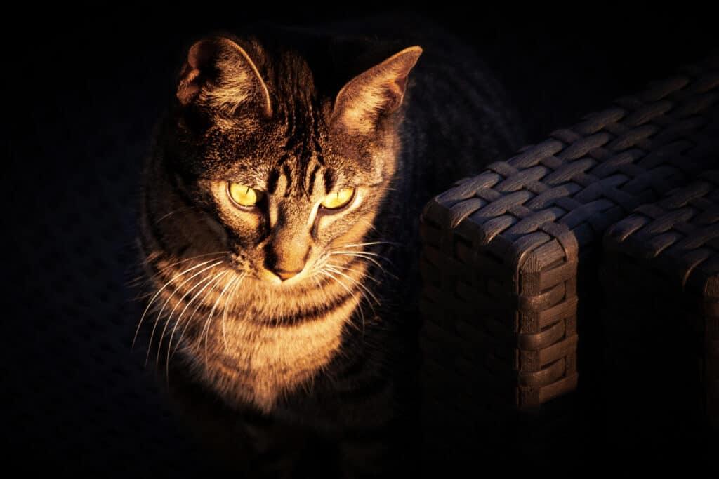 cats_PARENAS_2021-01-14_PIPER-4734_bearb