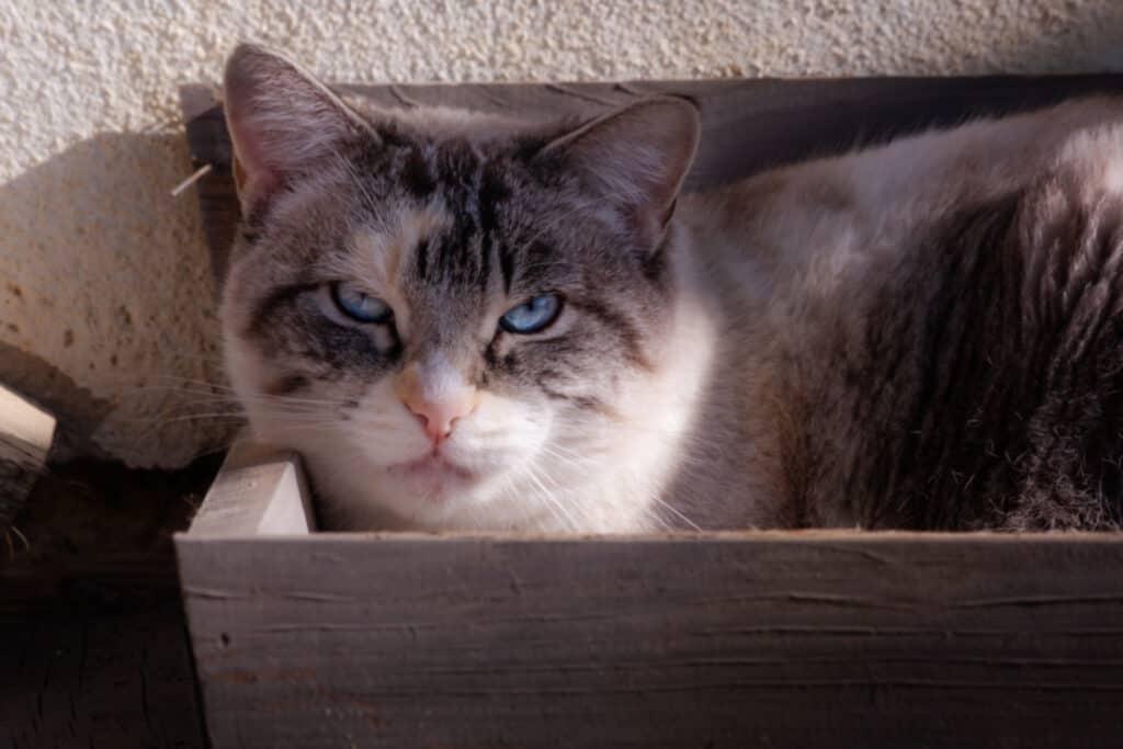 cats_PARENAS_2021-01-14_SAURA-4439