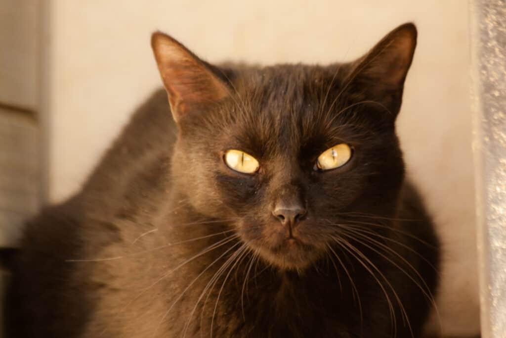 cats_PARENAS_2021-01-14_WANGAI-4474
