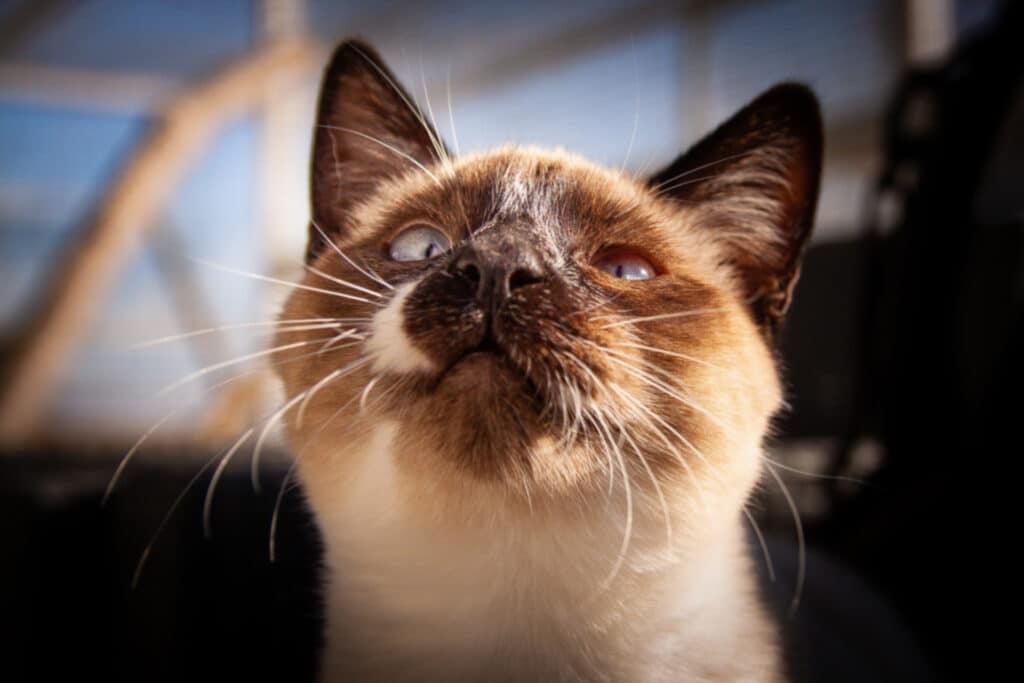 cats_PARENAS_2021-01-14_ZAZA-9974