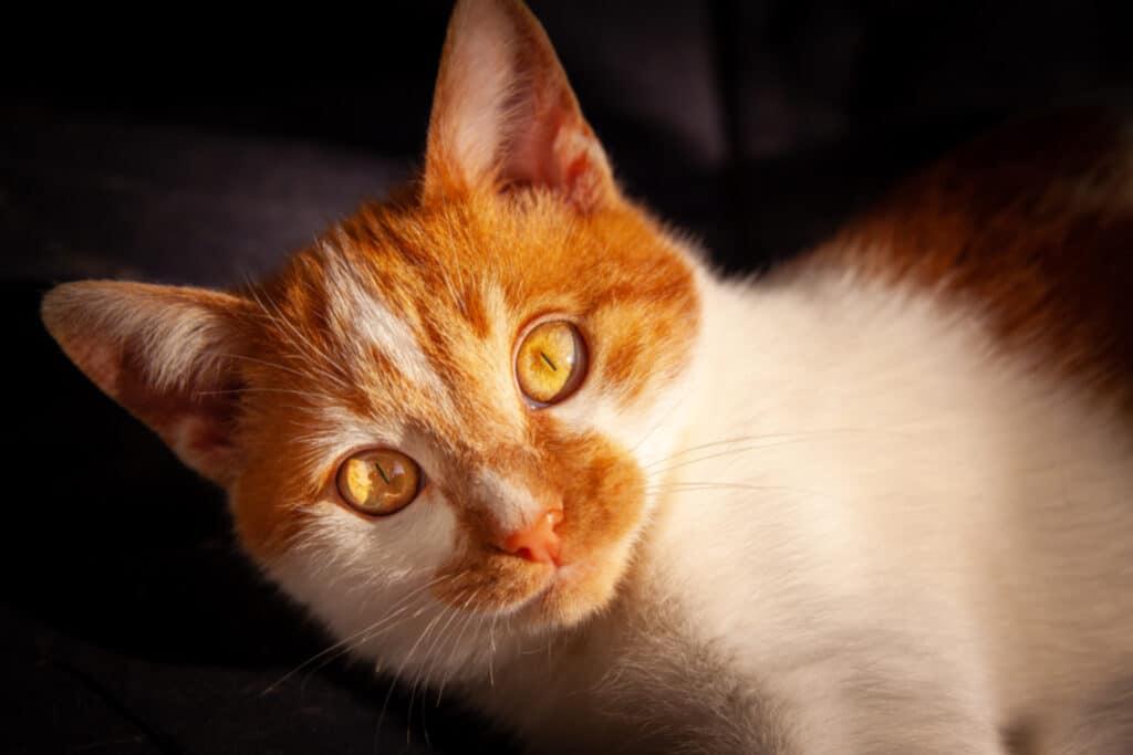 cats_PARENAS_2021-01-14_ZEBO-9967