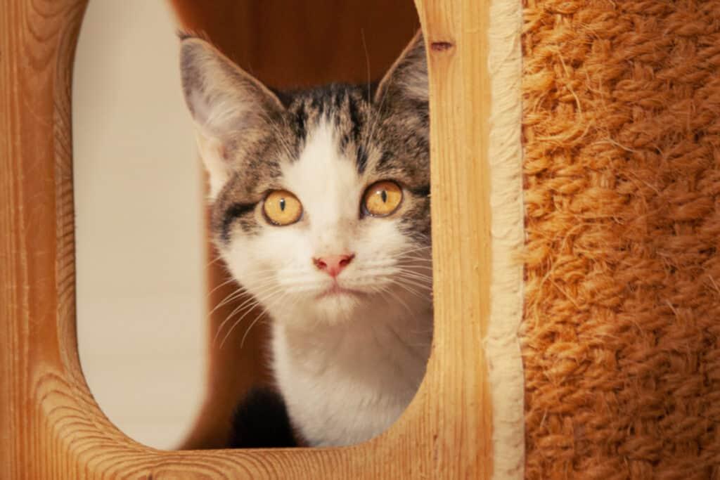 cats_PARENAS_WAYTA_2021-01-14-4710