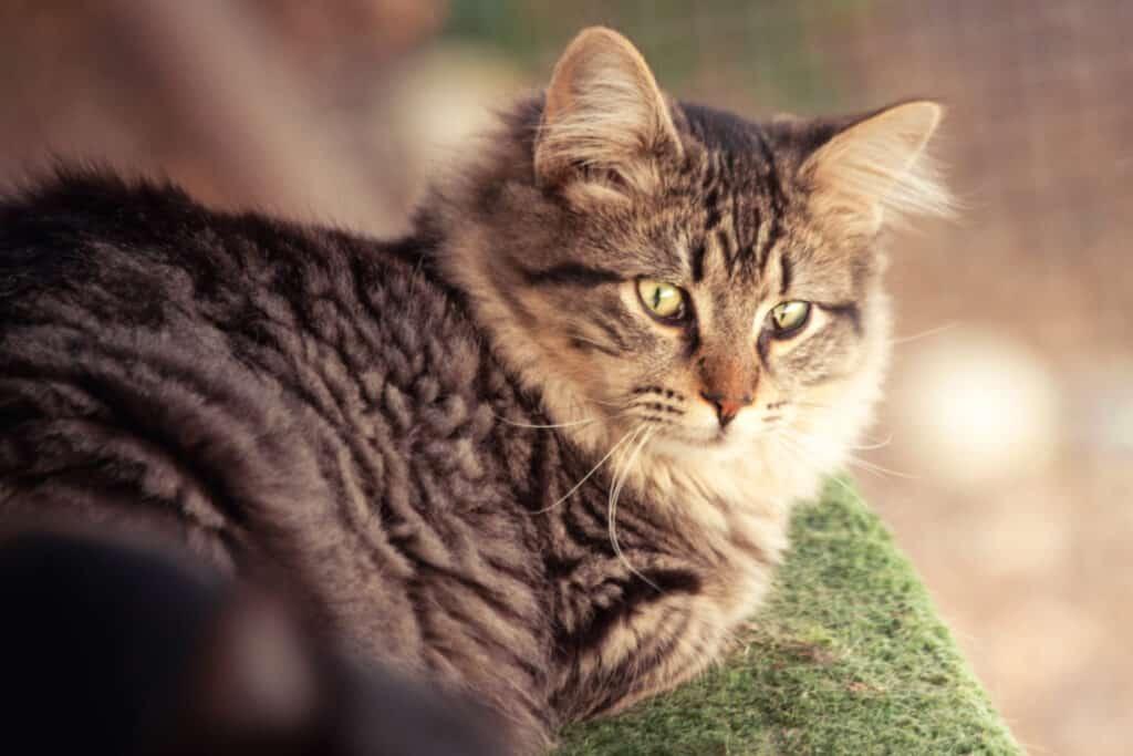 cats_PARENAS_WIRO_2021-01-14-4767