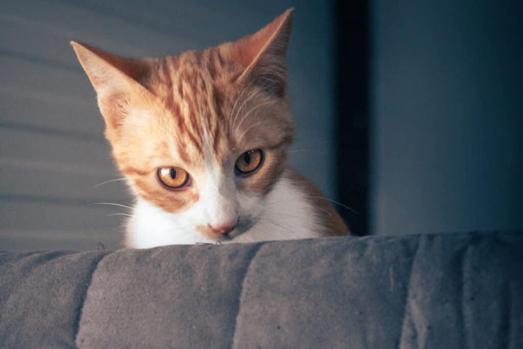 cats_PARENAS_ZAMIR_2021-01-14-0054_cut