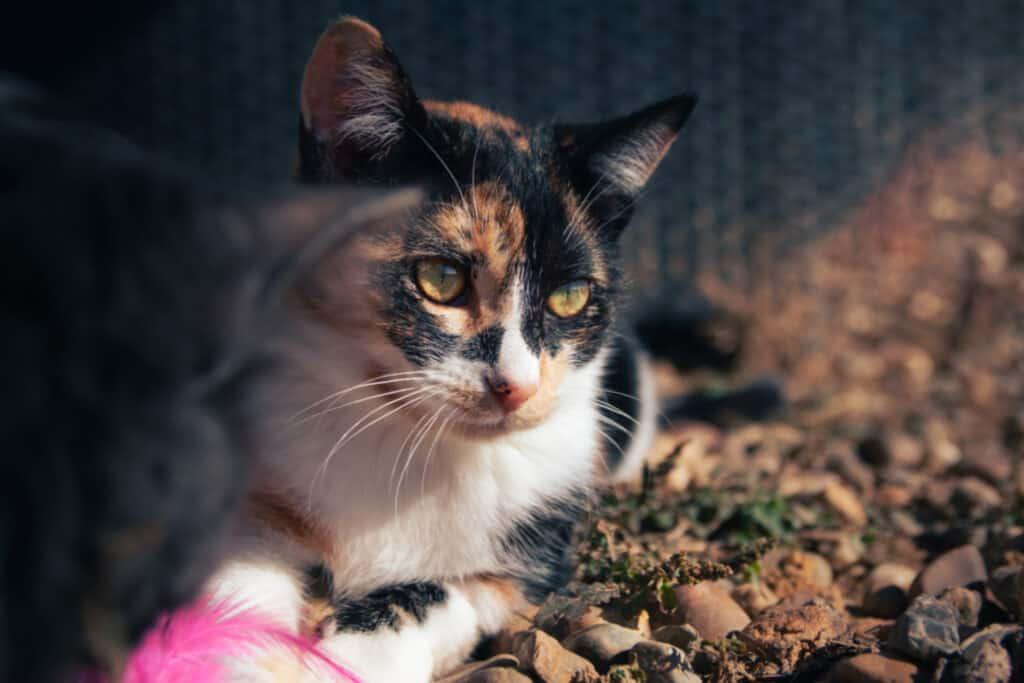 cats_PARENAS_ZISKA_2021-01-14-9909