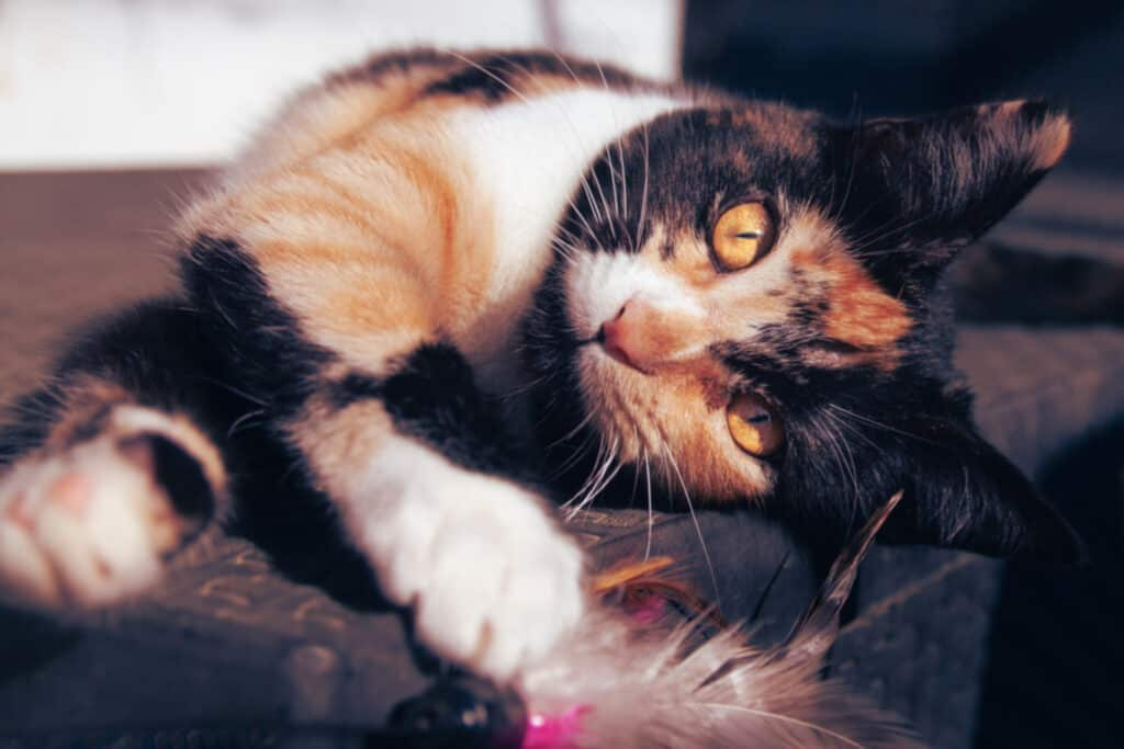 cats_PARENAS_ZIZI_2021-01-14-9886