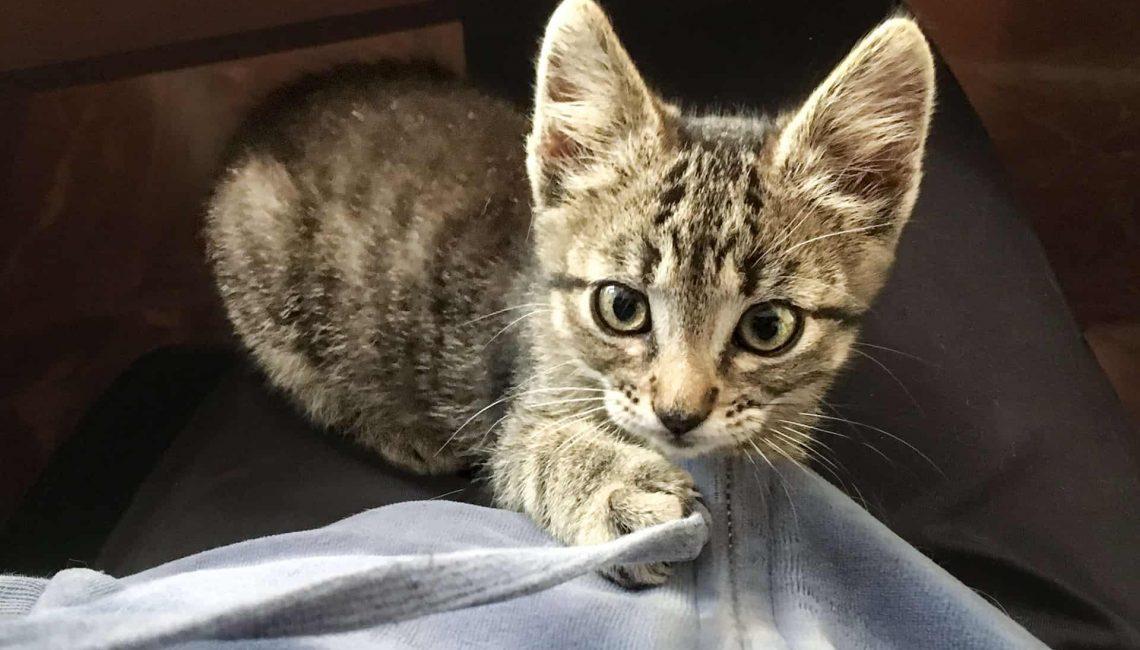 Kitten – Ronda