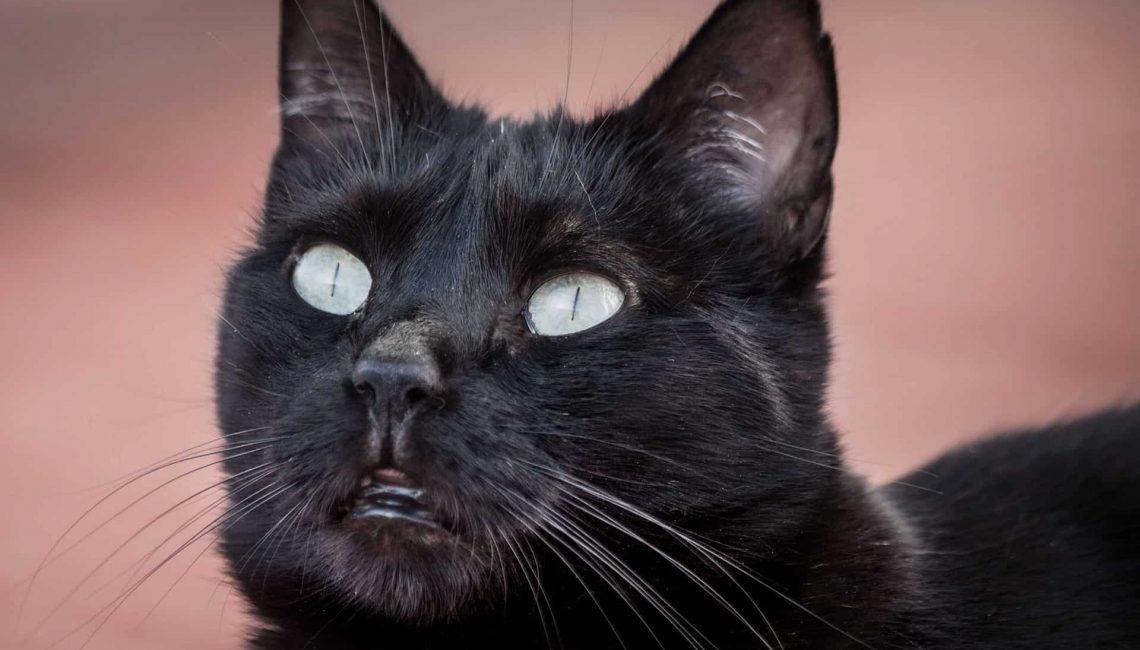 Katze – Peggy
