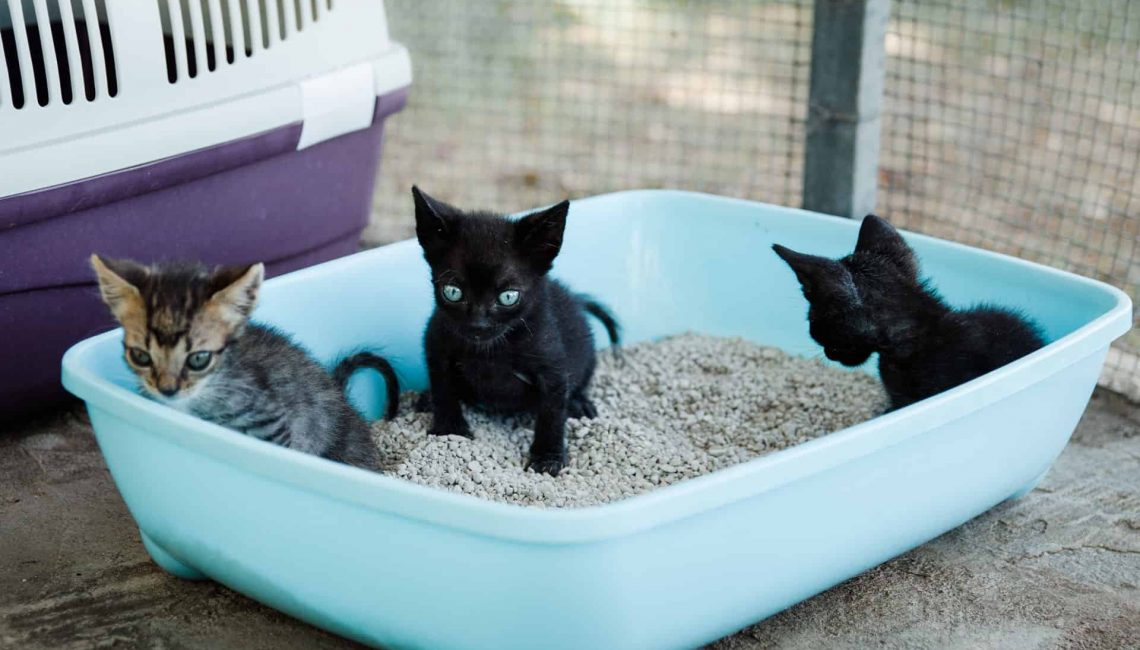 LosCampeones – Kitten in Kistchen
